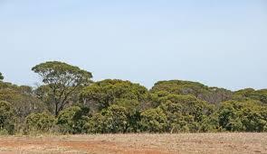 Remnant Vegetation